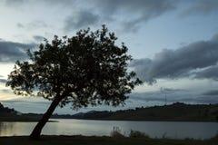 在下午日落末期的树剪影在一个湖在圣保罗乡下  免版税库存图片