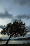 在下午日落末期的树剪影在一个湖在圣保罗乡下  免版税图库摄影