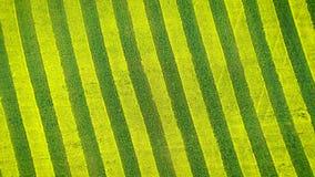 在下来农业领域天线的黄色和绿线和转动施催眠术 股票录像