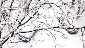 在下的两辆汽车降雪在有积雪的树的一个冬天公园 股票视频