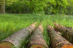 在下萨克森州注册森林 免版税库存图片