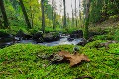 在下落的叶子后的流动的小河 库存照片