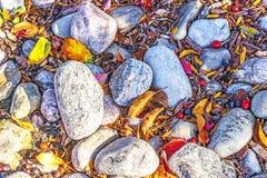 在下落的叶子和莓果中的庭院岩石在秋天 库存照片