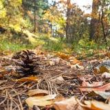 在下落的叶子的Pinecone 免版税库存照片