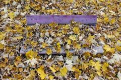 在下落的叶子盖的长凳 免版税图库摄影
