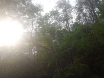 在下落的树后的Sunseting 免版税库存照片