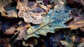 在下落的橡木叶子的水下落 免版税库存照片