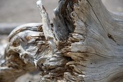 在下落的灰色树的被腐蚀的树干 免版税库存照片