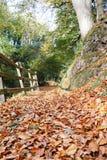 在下落的秋叶盖的森林道路 免版税库存图片