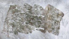 在下落的雪下的圣诞树 库存例证