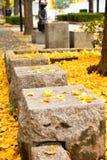在下落的黄色银杏叶子的石位子 库存照片
