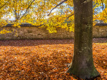 在下降时间的树 图库摄影