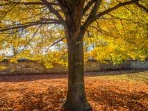 在下降时间的树 免版税库存图片