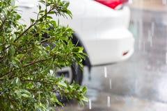 在下雨和迷离汽车背景期间的绿色树灌木在停车场 库存图片