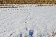 在下雪的领域的步 免版税库存图片