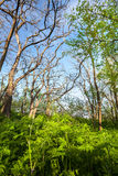在不可思议的森林足迹的美好的日落 一些反弹严格晴朗那里不是的蓝色云彩日由于域重点充分的绿色横向小的移动工厂显示天空是麦子白色风 库存照片