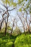 在不可思议的森林足迹的美好的日落 一些反弹严格晴朗那里不是的蓝色云彩日由于域重点充分的绿色横向小的移动工厂显示天空是麦子白色风 免版税库存图片