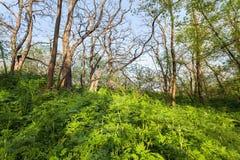 在不可思议的森林足迹的美好的日落 一些反弹严格晴朗那里不是的蓝色云彩日由于域重点充分的绿色横向小的移动工厂显示天空是麦子白色风 图库摄影