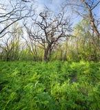 在不可思议的森林足迹的美好的日落 一些反弹严格晴朗那里不是的蓝色云彩日由于域重点充分的绿色横向小的移动工厂显示天空是麦子白色风 免版税库存照片