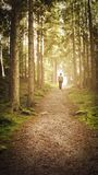 Man walking up path towards the light in magic forest. 库存图片