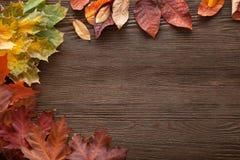 在与叶子框架的树分类的秋天的词和insc 免版税库存照片
