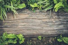 在与叶子的地面上安置的木材在它附近 库存照片