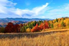 在与密集的森林的高山有在大草坪的好的桔黄色树 库存照片