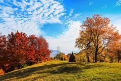 在与密集的森林的高山有在大草坪的好的桔黄色树 库存图片