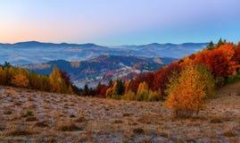 在与密集的森林的高山有在大草坪的好的桔黄色树 免版税图库摄影