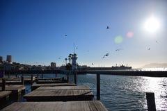 在与封印和海鸥的一晴朗的无云的天期间码头39在旧金山 免版税图库摄影