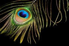 在黑色的孔雀羽毛 免版税库存照片