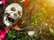 在与树和玫瑰花瓣的根的土壤埋没的人的头骨前面在边 头骨有土附有 免版税库存图片