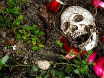 在与树和玫瑰花瓣的根的土壤埋没的人的头骨前面在边 头骨有附上的土 免版税库存照片