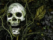 在与树的根的土壤埋没的人的头骨前面在边的 库存图片