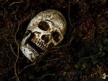 在与树的根的土壤埋没的人的头骨前面在边的 免版税库存照片