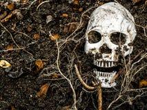 在与树的根的土壤埋没的人的头骨前面在边的 免版税库存图片