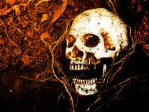 在与树的根的土壤埋没的人的头骨前面在边的 库存照片