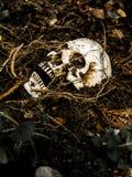 在与树的根的土壤埋没的人的头骨旁边在边的 头骨有土附加头骨 免版税图库摄影