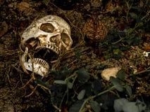 在与树的根的土壤埋没的人的头骨旁边在边的 免版税库存图片