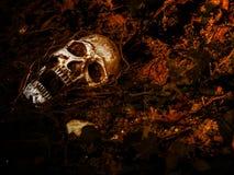 在与树的根的土壤埋没的人的头骨前面在边的 免版税图库摄影