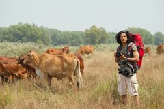 在与母牛的领域 免版税库存照片