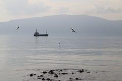 在与海鸥的海湾停住的船 免版税库存图片