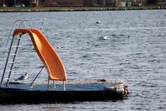 滑在与海鸥的水中 免版税库存照片