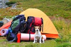 在与狗的一次远足 真实的朋友 有Knout开会的吸引的妇女 免版税图库摄影