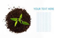 在与空间的白色背景隔绝的年轻绿色植物文本的。 顶视图 免版税图库摄影