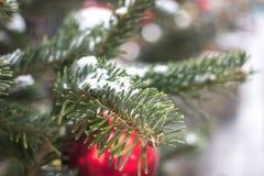 在与红色中看不中用的物品的杉树雪叶子的特写镜头  免版税库存图片