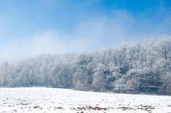 在与蓝色清楚的天空的一个美好的冷的冬天期间冰冷的森林 免版税图库摄影
