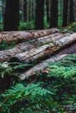 在与蕨和植物生长的堆堆积的被切开的树日志 库存照片