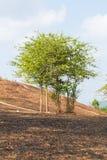 在与被烧的树的火以后 库存图片
