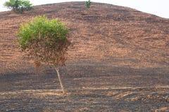 在与被烧的树的火以后 图库摄影